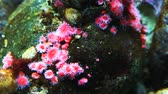 biodiversidade : A close view of colorful tropical sea creatures Stock Footage