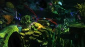 biodiversidade : Many Colorful Tropical Fish swim in beautiful coral