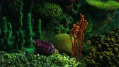 biodiversidade : Bright Tropical Fish swim in colorful coral growths.