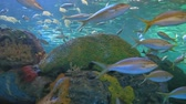 biodiversidade : Large schools of fish drift in a coral reef
