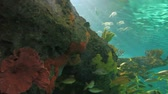 biodiversidade : A close view of large schools of fish drift in a sun-drenched coral reef