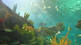 biodiversidade : A close view of large schools of fish drifting in a sun-drenched coral reef