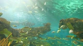 biodiversidade : Large schools of fish drift in a sun-drenched coral reef