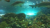 biodiversidade : Sharks swim among large colorful schools of tropical fish