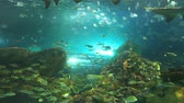 biodiversidade : Sharks swim among large schools of tropical fish Stock Footage
