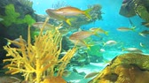 biodiversidade : A coral reef with Yellowtailed Snapper and other tropical fish swimming