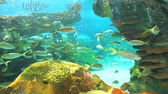 biodiversidade : A coral reef with Yellowtailed Snapper swimming