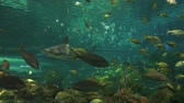 biodiversidade : Sharks cruise through colorful schools of tropical fish
