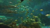 biodiversidade : Sharks cruise through schools of colorful tropical fish Stock Footage