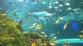 тропический : Colorful schools of tropical fish with barracuda cruising through