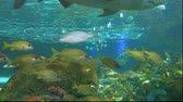 biodiversidade : Schools of colorful tropical fish Stock Footage