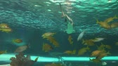 biodiversidade : Sharks swim through a school of Yellowtailed snapper. Stock Footage