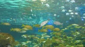 biodiversidade : Schools of tropical fish Stock Footage