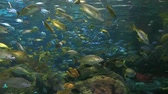 biodiversidade : Huge schools of colorful tropical fish