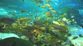 biodiversidade : Colorful coral encrusted reefs with large numbers of tropical fish and sharks