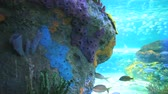 biodiversidade : Colorful tropical coral encrusted reefs with large numbers of tropical fish