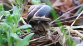 caracol : A colorful snail in closeup