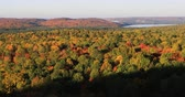 vibrante : 4K UltraHD Algonquin forest in autumn