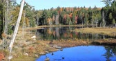 vibrante : 4K UltraHD Scene from Algonquin in autumn