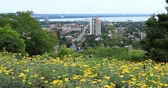 canteiro de flores : Hamilton, Canada, city center with flowers in foreground 4K Stock Footage