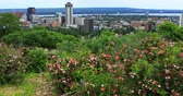 niagara : View of Hamilton, Canada, city center with flowers in foreground 4K