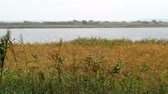 salgueiro : Hiddensee Isle in autumn time. Coast with reed and willow trees (Mecklenburg-Vorpommern, Germany)