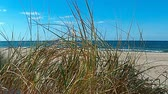 value : Beach of the Baltic Sea with beach grass