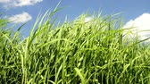 useful resources : grass in summertime