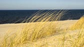 vacancy : Beach of the Baltic Sea with beach grass