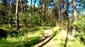 lã : Walking though a forest at the Baltic coast in Poland Stock Footage