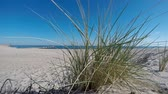 volné místo : Beach of the Baltic Sea with beach grass