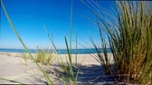 blue sea : Beach of the Baltic sea with beach grass