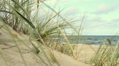 volné místo : Beach of the Baltic sea with beach grass and wind