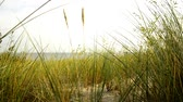 outonal : Beach of the Baltic sea with beach grass and wind