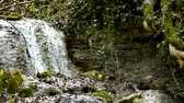 горный хребет : waterfall with spring and snowflake, early spring flower Стоковые видеозаписи