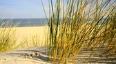 volné místo : Beach of the Baltic sea with beach grass, wind and Baltic sea in the background