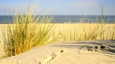 рай : Beach of the Baltic sea with beach grass, wind and Baltic sea in the background