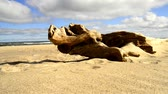 baltské moře : Driftwood at a beach of the Baltic sea with strong surf Dostupné videozáznamy