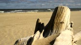 Driftwood at a beach of the Baltic sea with strong surf Stock Footage