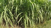 ogrzewanie : Switch grass in summertime with young fresh plants