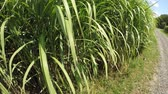 useful resources : Switch grass in summertime with young fresh plants