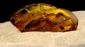 průsvitný : Amber, big piece with a fly on turn table