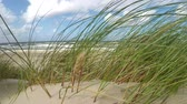 Beach of the Baltic sea with beach grass and wind