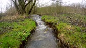 Small, vivid creek in spring in Gemany Stok Video