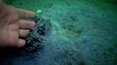 dano : Plastic debris on the bottom of the Black Sea. Rotting algae, sea mushrooms, anoxic zone, asphyxiation