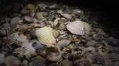 exposto : Shellfish shells Cerastoderma and Anadara on the shore, night shooting Vídeos