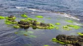 tiro : Green algae on rocks at shallow depths near the coast, Black Sea, Bulgaria