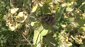 picar : Honeycomb wasps. A nest with a salmon on the grass. Ukraine Stock Footage