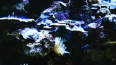 捕食性の : Underwater landscape. Nemo fish (Amphiprion sp.)