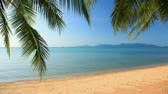 tropical beach and palm leaves Stock Footage